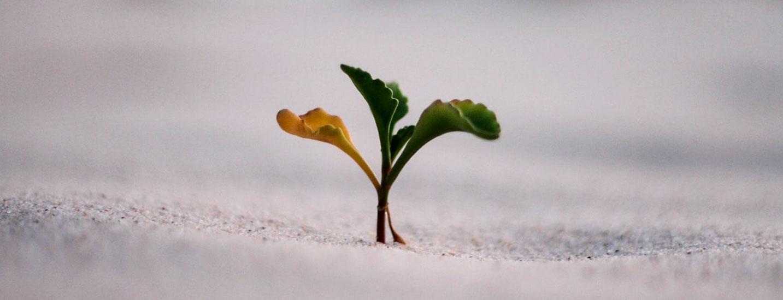 پنج عامل شایستگی کلیدی در رهبری کارآمد
