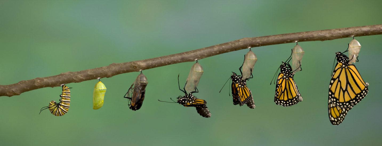 ۴ گام اساسی برای موفقیت در تحول فرهنگ سازمانی