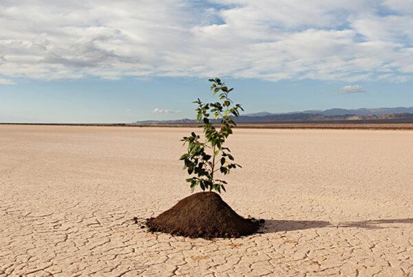 توجه به رشد پس از سانحه در سازمان ها
